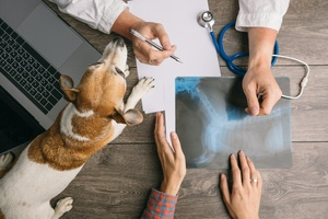 Merchant accounts for vets and pet businesses